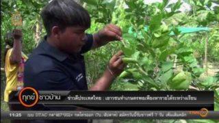 ข่าวดี  สำหรับเยาวชนไทย ทำเกษตรพอเพียงหารายได้ระหว่างเรียน
