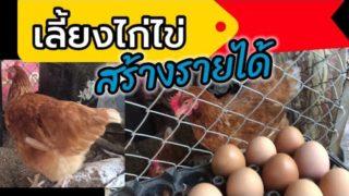 เทคนิค การเลี้ยงไก่ไข่ที่ สร้างรายได้เสริม