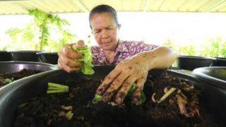 เทคนิต ชาวบ้านเลี้ยงไส้เดือนสร้างรายได้เสริม หรืออาชีพหลักได้